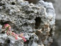 Stone Flower I