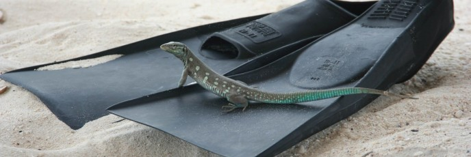 Lizard On Fins